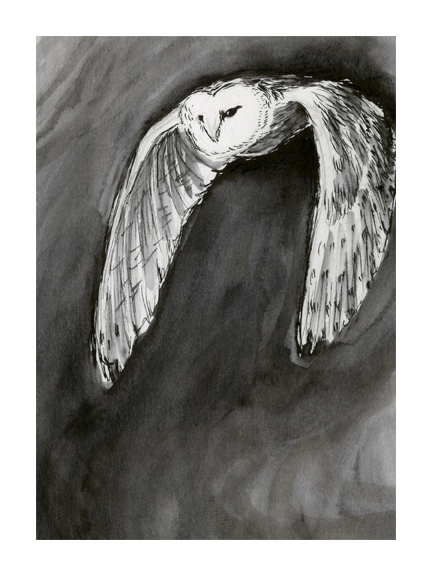 <p>Owl</p>