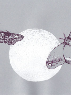 Moon Moths